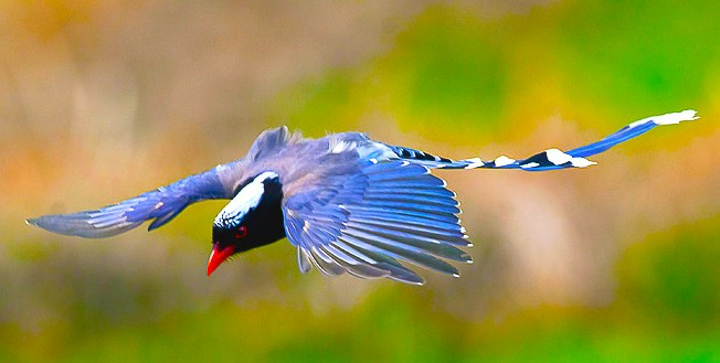 十分漂亮稀有鸟