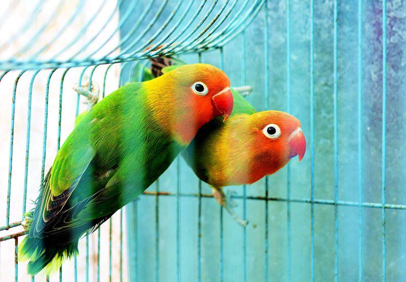 笼中小鸟,求拍砖 摄影俱乐部