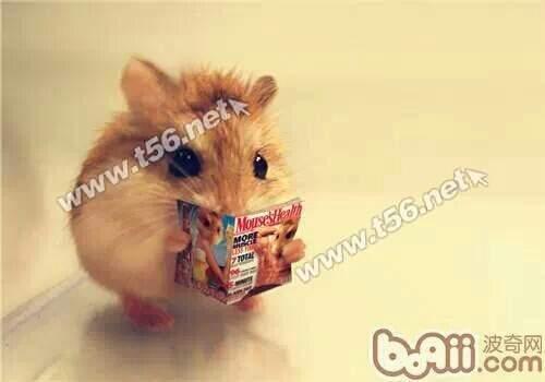 可爱小仓鼠连笼子30块出了图片